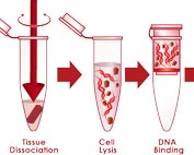 Solid phase carrier adsorption DNA extraction